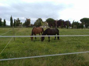 parc a chevaux équitation