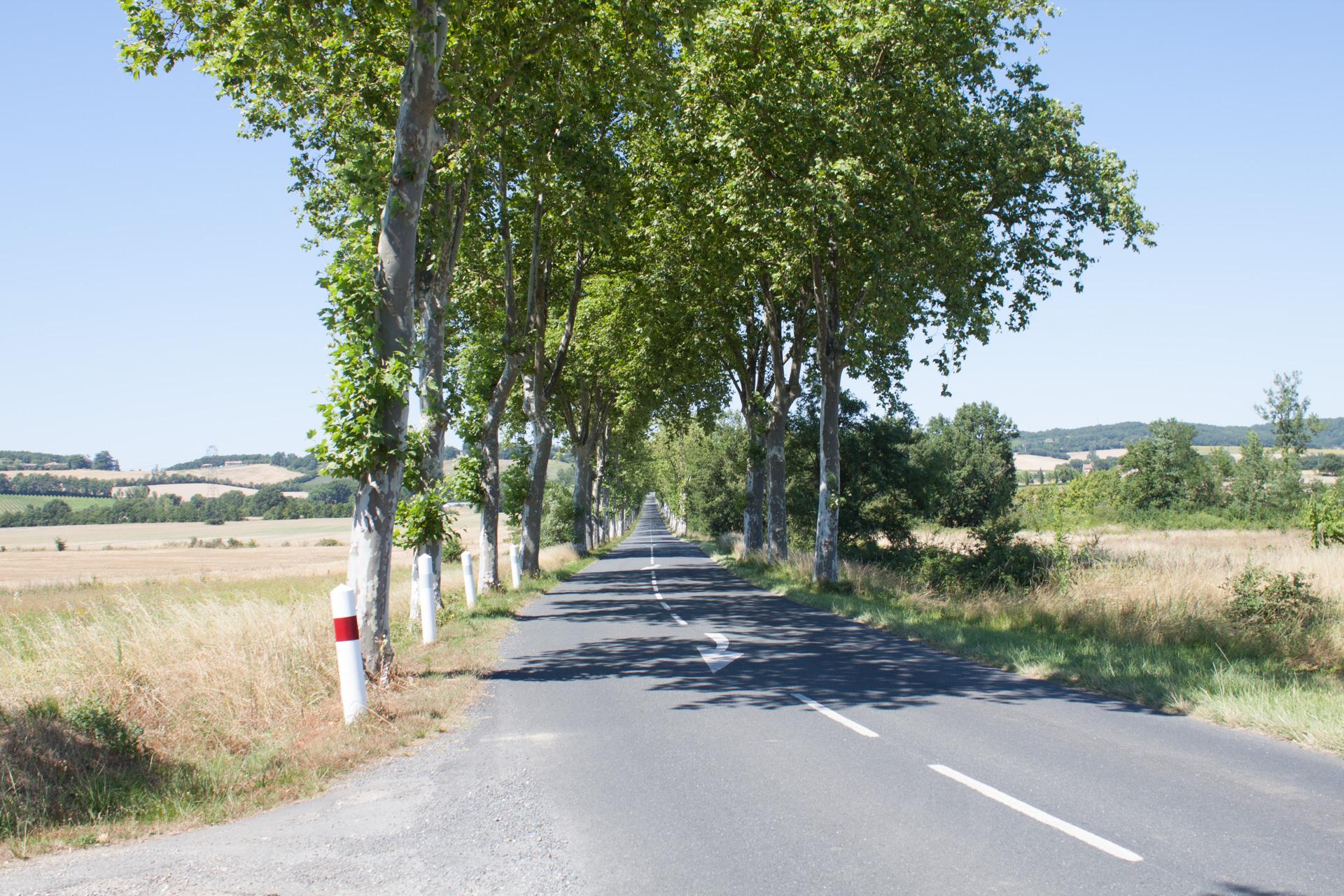 route d'accès avec allée de platane
